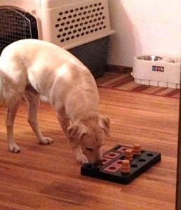 Daisy playing Chess