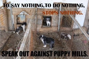 Puppy mill kennels