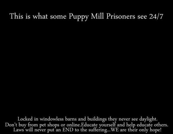 puppymillsblack